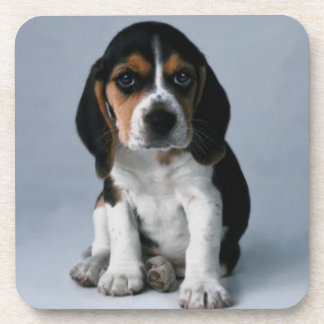 Beagle Puppy Dog Photo Coaster