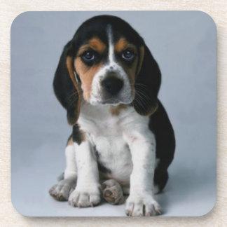 Beagle Puppy Dog Photo Coaster