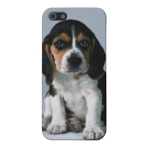 Beagle Puppy Dog Photo Cover For iPhone 5