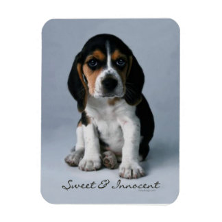 Beagle Puppy Dog Photo Magnet
