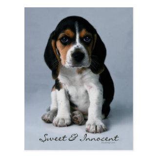 Beagle Puppy Dog Photo Postcard