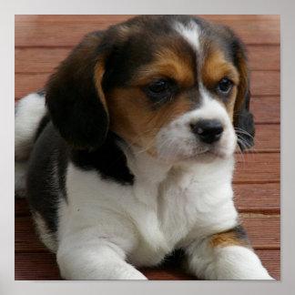 Beagle Puppy Dog Poster Print