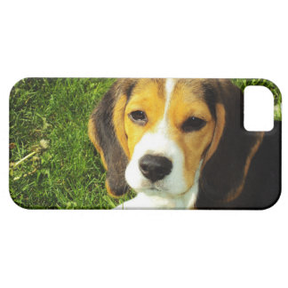 Beagle Puppy iPhone 5 Case