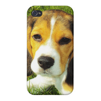 Beagle Puppy iPhone 4 Cases