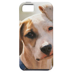 Case-Mate Vibe iPhone 5 Case with Beagle Phone Cases design