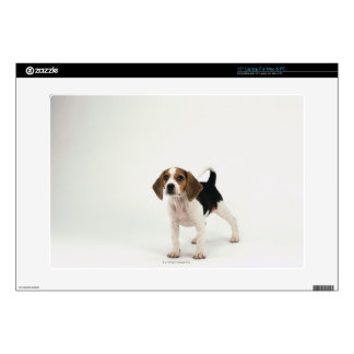 Beagle puppy laptop decal