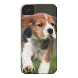 Case-Mate iPhone 4 Barely There Universal Case with Beagle Phone Cases design