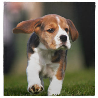 Beagle Puppy Love Napkin