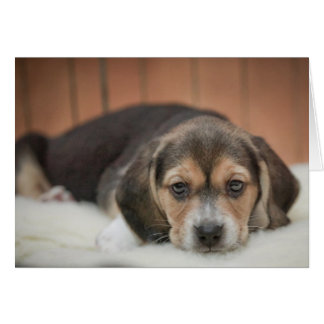 Beagle Puppy Nighty Night Cards