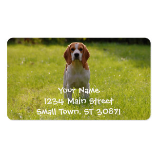beagle puppy on guard pack of standard business cards