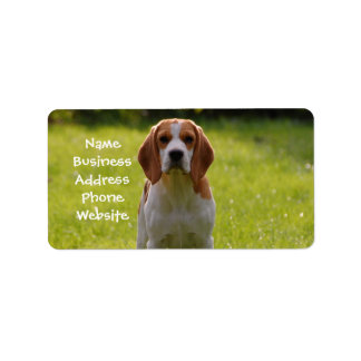 beagle puppy on guard label