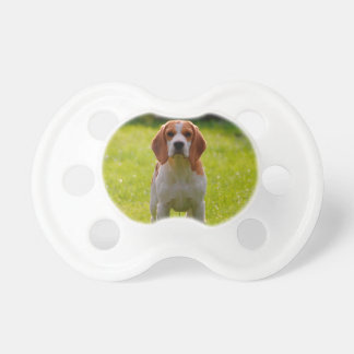 beagle puppy on guard BooginHead pacifier
