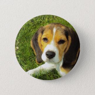Beagle Puppy Pinback Button