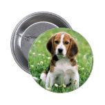 Beagle Puppy Pinback Buttons