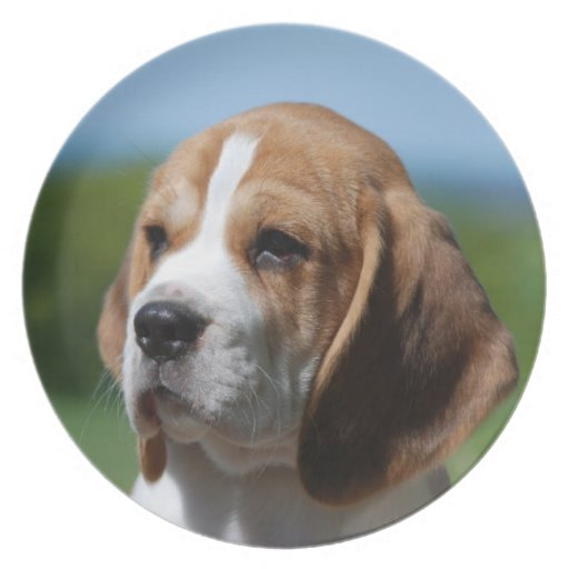 Beagle Puppy Plate