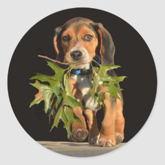 Beagle Puppy Playing With Leaves Classic Round Sticker