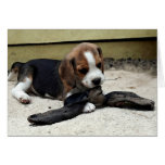Beagle Puppy Portrait Blank Greeting Card