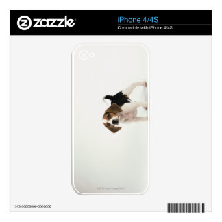 Beagle puppy skins for iPhone 4S