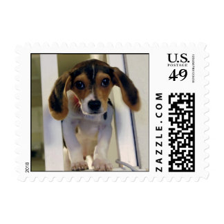 beagle puppy stamp