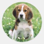 Beagle Puppy Sticker