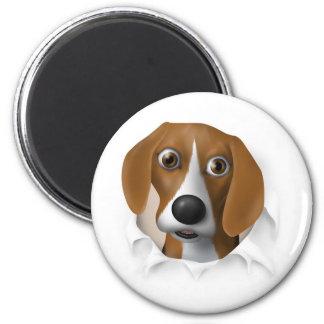 Beagle que revienta hacia fuera imán de frigorifico