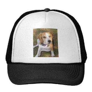Beagle que sienta 2.png gorras