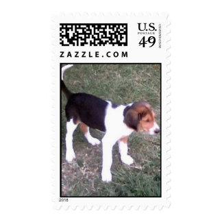 beagle sello