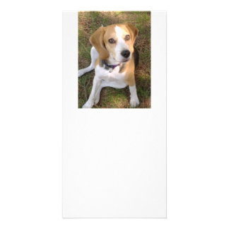 Beagle sitting 2 card