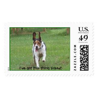Beagle Slobber Postage Stamps