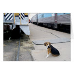Beagle solo que espera un tren - tarjeta de felici