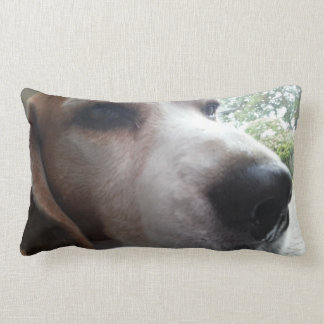 Beagle soñoliento almohadas