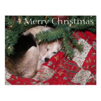 Beagle soñoliento del navidad tarjetas postales