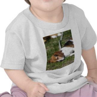 Beagle soñoliento camiseta