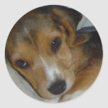 Beagle Sticker 2