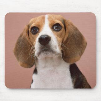 Beagle Tapete De Ratones