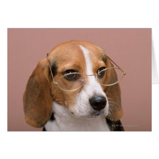 Beagle Tarjetón