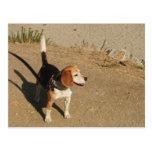 Beagle Tarjetas Postales