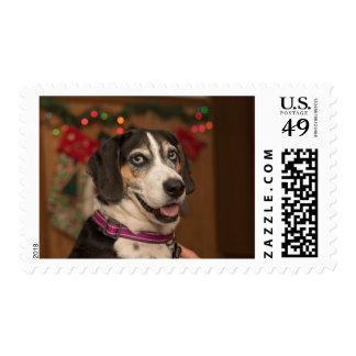 Beagle Walker Hound Christmas Stamp