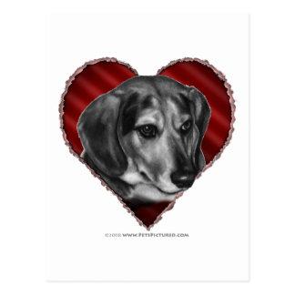 Beagle with Heart Postcard