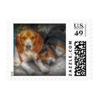 Beagles de Brother Sellos Postales