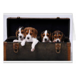 Beagles Greeting Cards