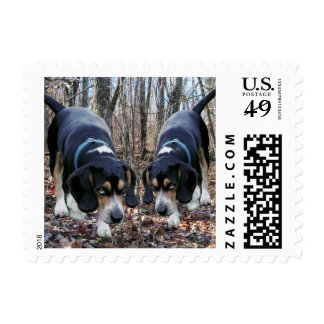 Beagles Hunting The Woods Postage