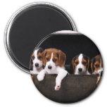 Beagles Imán Para Frigorifico