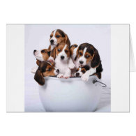 Beagles in Bucket Cards