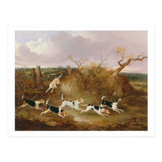 Beagles in Full Cry, 1845 (oil on canvas) Postcard