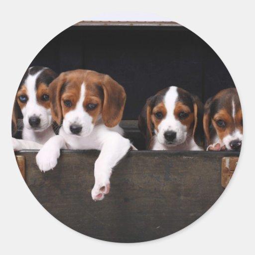 Beagles Pegatina Redonda