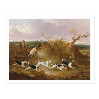 Beagles por completo…, 1845 (aceite en lona) postal