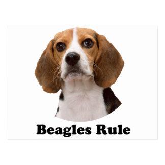 Beagles Rule Postcard