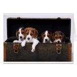 Beagles Tarjetón