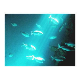 Beam of Light Underwater Fish Swimming Canvas Print